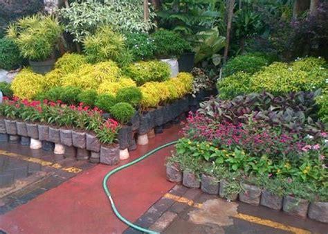 Jual Bibit Bunga Di Kota Batu jual tanaman hias di jombang jual bibit tanaman