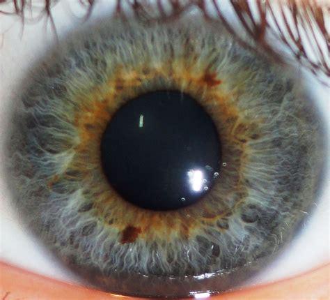 iris pattern types file close up image of a human iris jpg wikimedia commons