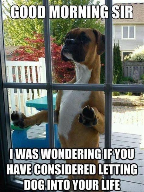 Funny Boxer Dog Memes - hilarious good morning meme good morning dog hello s