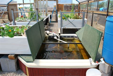bathtub aquaponics old hot tub and old bath tubs for an aquaponics set up