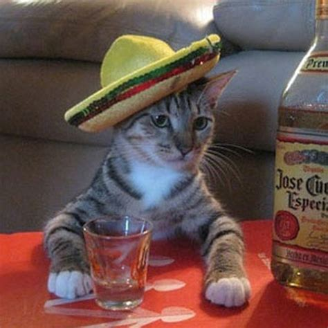 Mexican Sombrero Meme - hispanic meme animals with sombreros