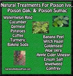 treatment for poison oak dr