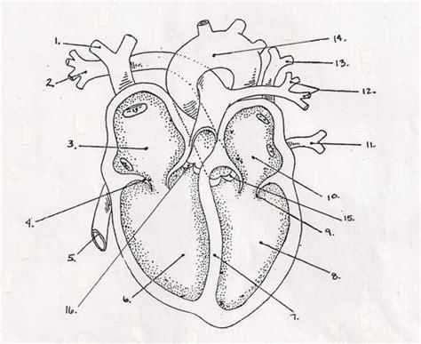 blank heart diagram   clip art  clip art  clipart library