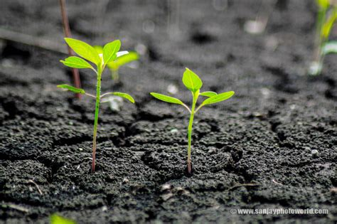 The Growing sanjay photo world growing plants from soil hd wallpapers