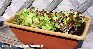 window box garden vegetables top 12 pesticide contaminated fruits and vegetables