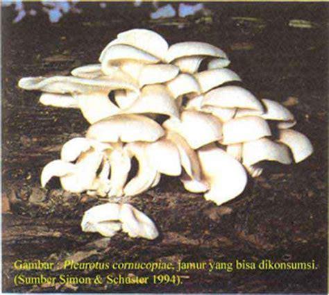 Anggur Pacitan Gambar 3 Jamur biologi kingdom fungi