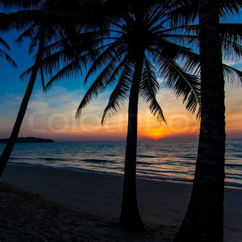 nice sunset tropical sunset palm trees stock photo