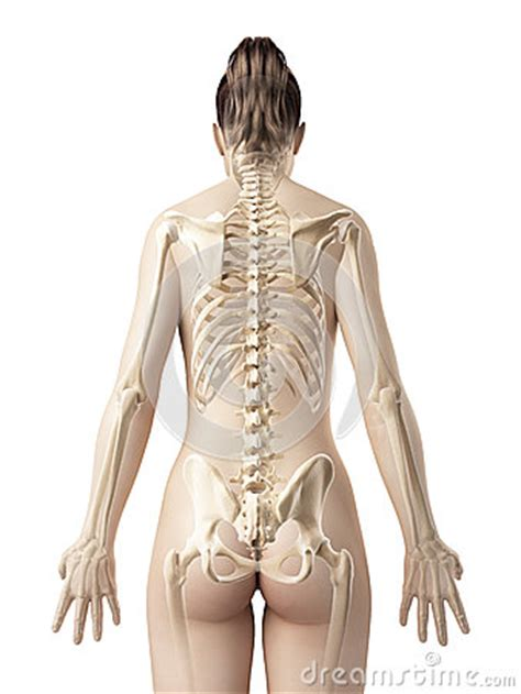 female skeleton from behind royalty free stock photography