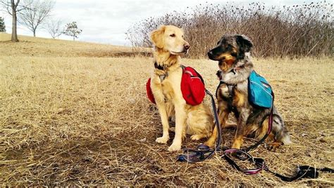 hiking dogs hiking gear overview of hiking boots packs and clothes