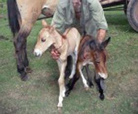 burros con yeguas horse breeding donkey videos just b cause