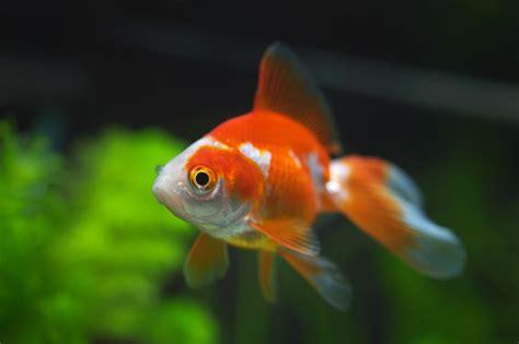 imagenes de uñas tipo pecera los peces ideales para tu acuario mascotalia