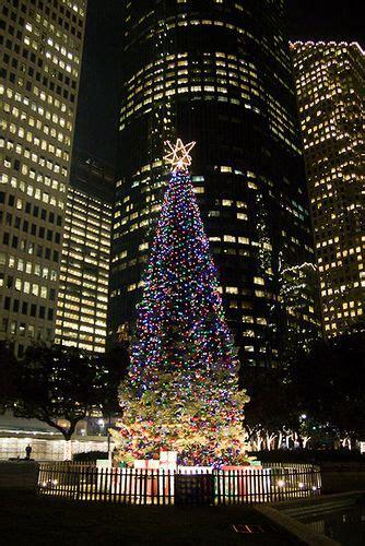 live christmas trees houston my 2nd year in usa merry trees see you and bar