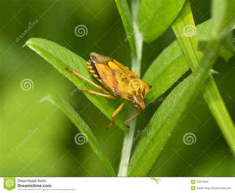 bug xl reguler 1gb yellow bug on a green background stock images image