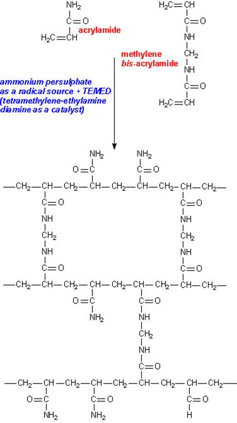 How Does Mba Cross Link Acrylamide by Untitled Document Www Ucl Ac Uk