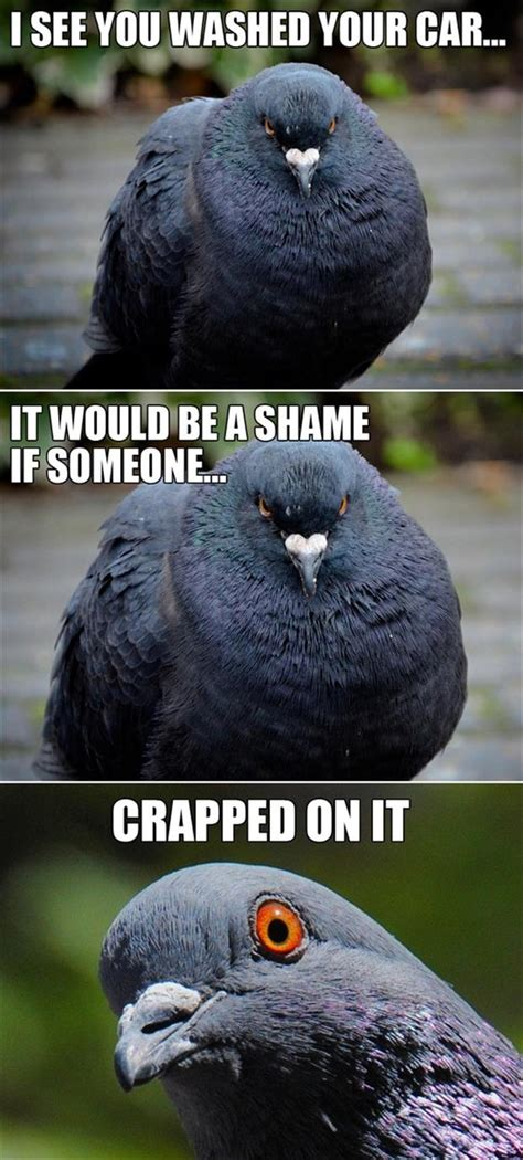 Crazy Bird Meme - 30 funny animal captions part 9 30 pics amazing
