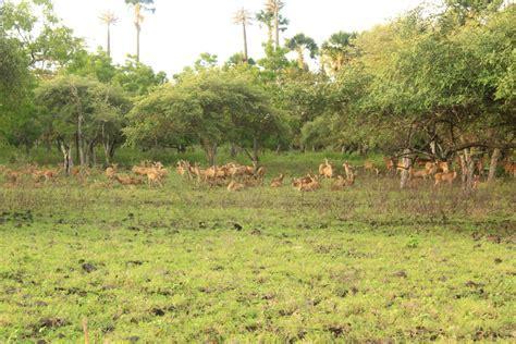 Baluran National Park   IJEN CRATER, IJEN BLUE FIRE, IJEN TOUR
