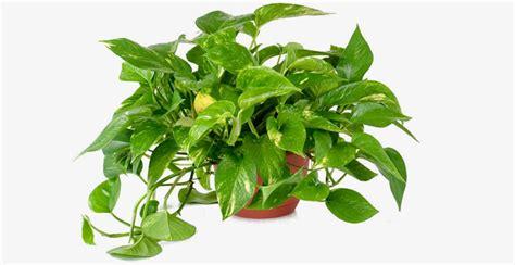 tanaman penyerap polusi  bakal bikin kamar kost kamu