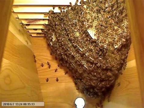high speed summary of life inside the beehive