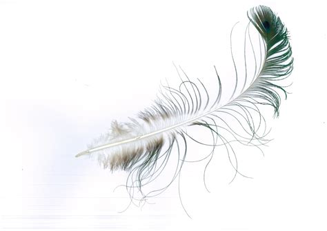 feather with peacock feather erica goldsack