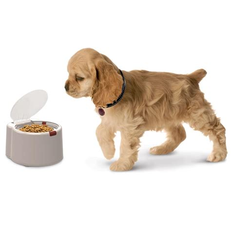 microchip activated feeder opens   pet approaches