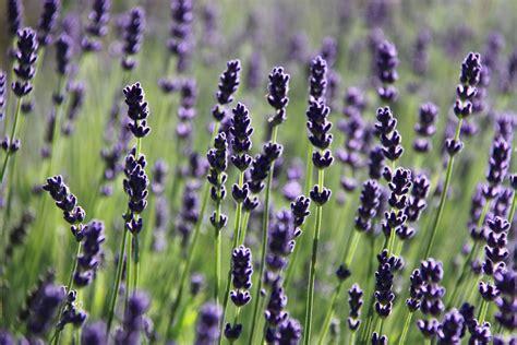 giardino delle erbe casola valsenio da non perdere a casola valsenio if imola faenza tourism
