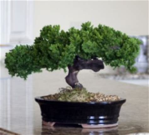 Instant Bonsai Just Remove Genes by 4 Accessories That Ll Give You That Green Thumb Look