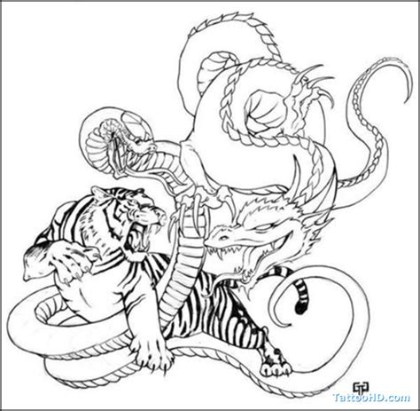 dragon and tiger tattoo designs tiger tattoos climbing tiger pictures tiger
