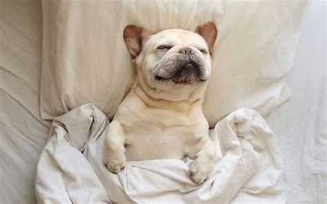 dogs in bed the 10 stages of monday the rock bury shopping centre