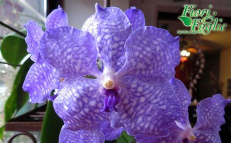 orchidea senza fiori orchidee superlusso senza fiori sono low cost fiori e