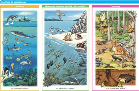 tics 2 darling animales de la selva nivel medio mayor el blog de los pitualandalus tema 4 conocimiento del
