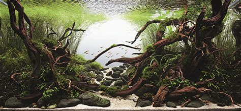 Ada The International Aquatic Plants Layout Contest 2015 international aquatic plants layout contest 2014 ada malaysia