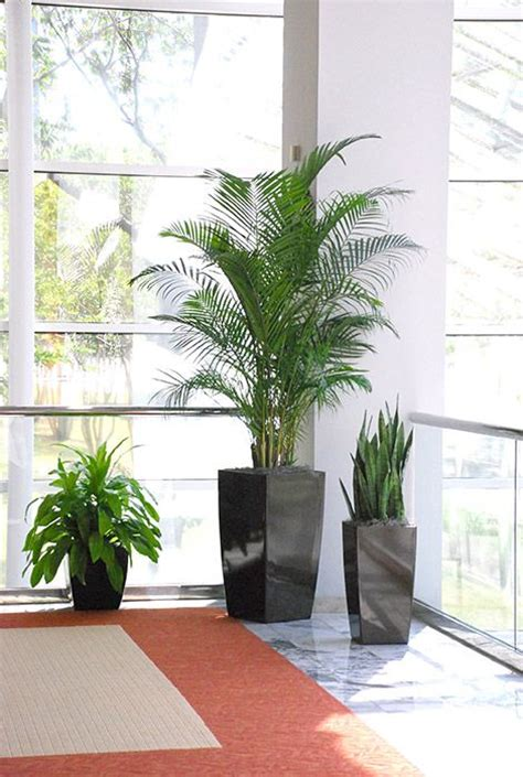 plants for the office 25 best ideas about office plants on pinterest plants