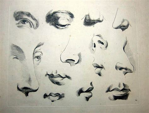 Drawing Noses by Figure Drawing How To Draw Nose Ears And Mouths