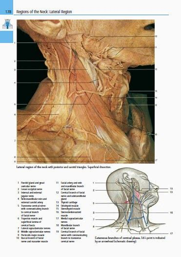 color atlas of anatomy color atlas of anatomy a photographic study of the human