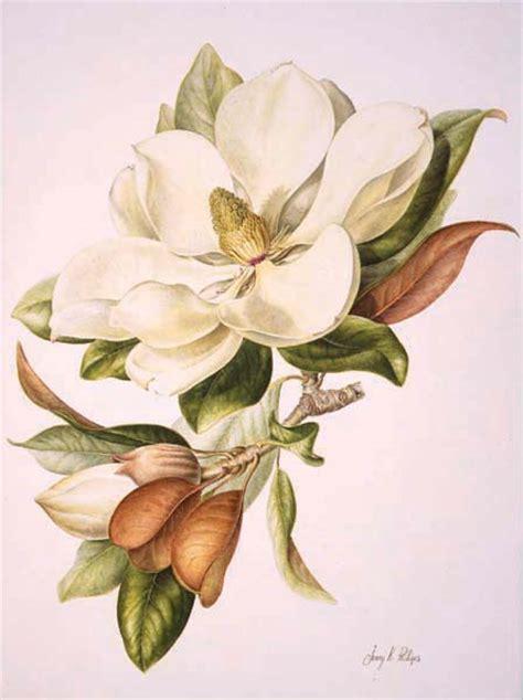 Gardenia Bites Gardenia Botanical Drawing Www Pixshark Images