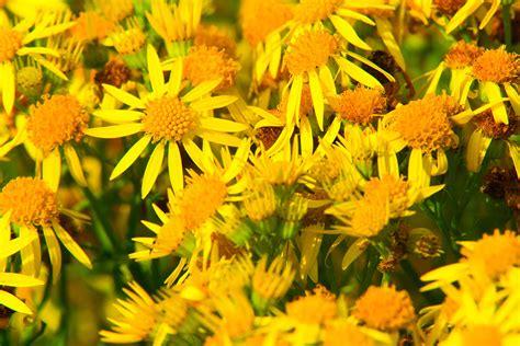 Katzen Giftige Zimmerpflanzen Bilder by Giftige Ungiftige Pflanzen F 252 R Katzen Bilder Datenbank