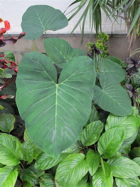 houseplants worth  recommendation  clients