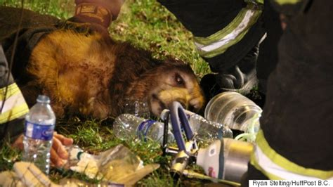 dog house vancouver vancouver firefighters bring dog back to life after house fire