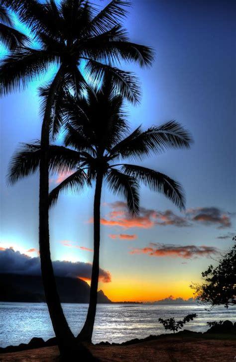 25 best ideas about palm 25 best ideas about palm tree island on