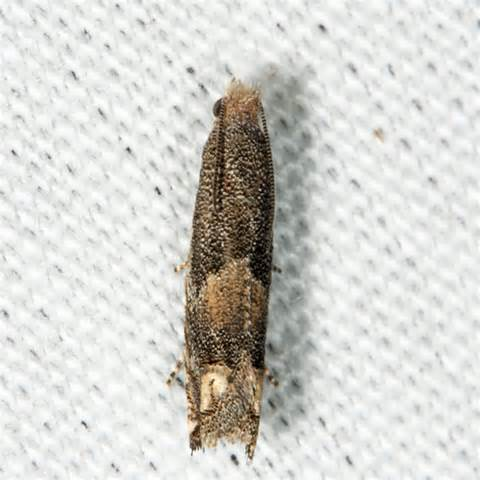 tiny moths all house tiny moths all house 28 images why are moths