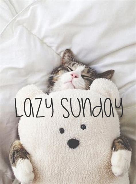 A Cat On A Sunday by Quotes About Lazy Sundays Quotesgram