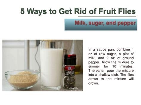 7 Ways To Get Rid Of Fruit Flies by 5 Ways To Get Rid Of Fruit Flies