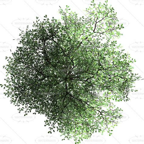 Trees Top png trees top www pixshark images galleries with a