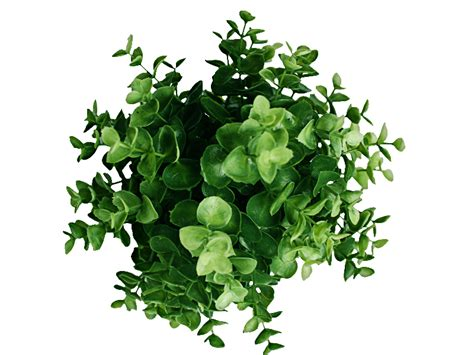 e plans com green plants png www pixshark com images galleries