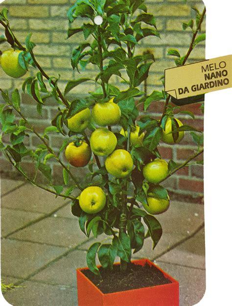 nano giardino melo nano da giardino vendita ilpiantonaio it
