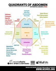 Stomach Sections by Best 25 Quadrants Of The Abdomen Ideas On