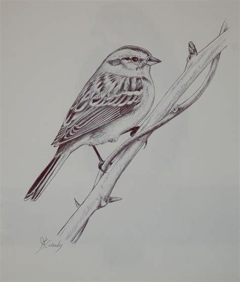 15 bird drawings jpg download