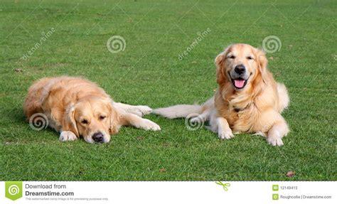 imagenes de animales felices pin another imagenes perros tiernos para facebook pictures