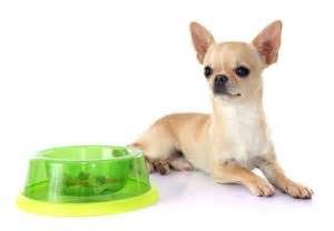 best food for chihuahua puppy best food for chihuahua 9 vet recommended brands