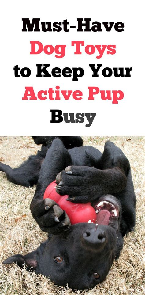 toys to keep puppy busy 5 must toys to keep your active busy thank u toys and we